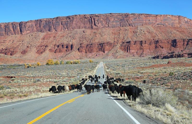 De Ronde van het vee omhoog royalty-vrije stock afbeeldingen
