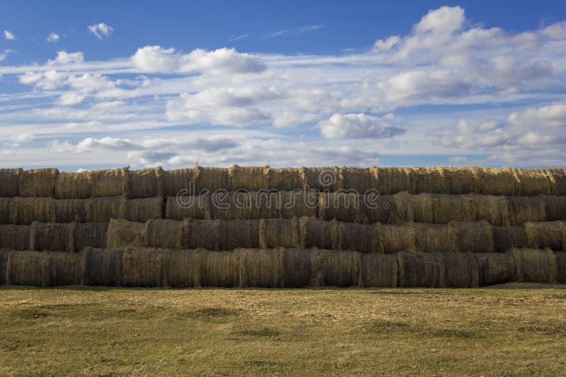 De ronde verpakt een stapel van droog geel hooi in balen ligt in vlotte rijen op een weide van gras tegen een blauwe hemel en wit stock foto