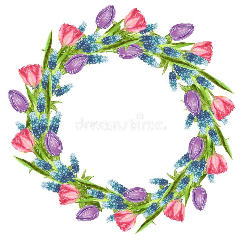De ronde vormde kroon van bloemen wordt gemaakt die: muscari, roze en purpere tulp vector illustratie