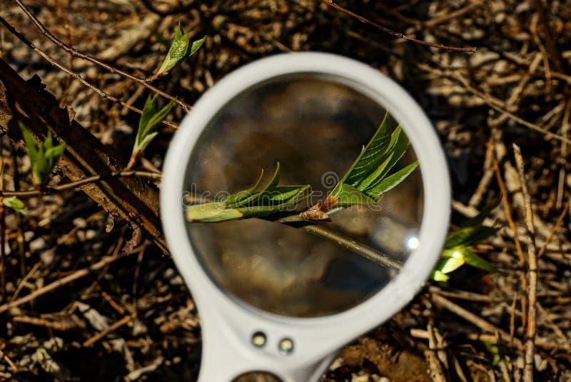 De ronde witte meer magnifier verhogingen groene bladeren op een boom vertakken zich in een tuin stock foto
