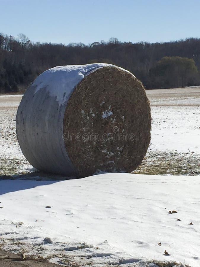 De ronde zitting van de hooibaal op een landbouwbedrijfgebied op een zonnige dag in de winter na oogst stock afbeeldingen