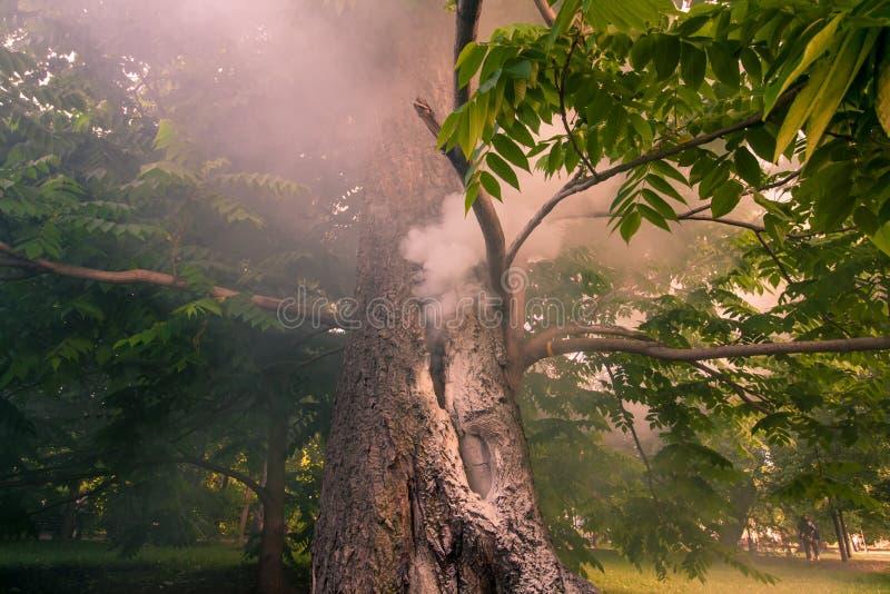 De rook komt uit de boom De boomstambrandwonden in het park royalty-vrije stock foto's