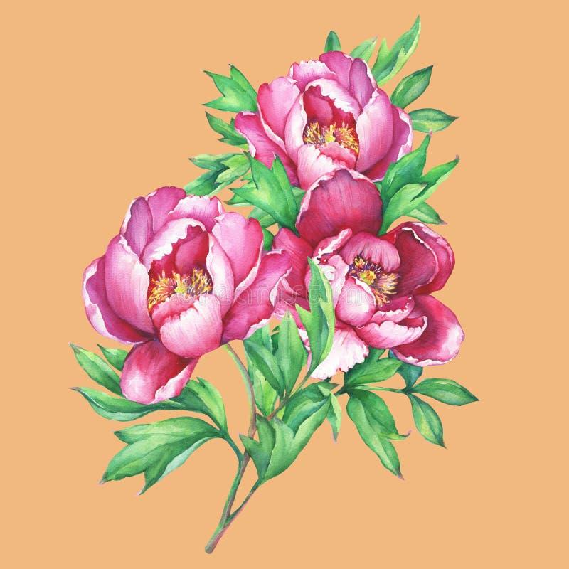 De rosa pionerna för bukettblomning som isoleras på orange bakgrund stock illustrationer