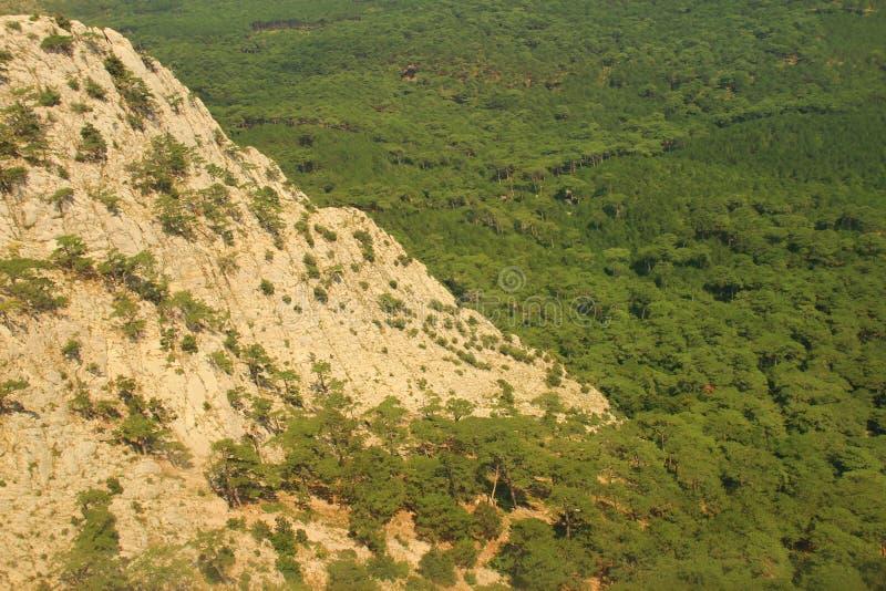 De rots en het bos stock foto's