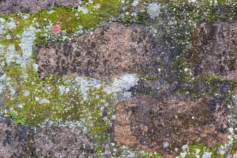 De rots, vorm, mos en liquen achtergrond stock afbeelding