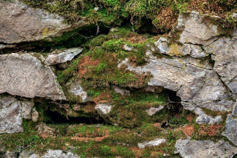 De rotsachtige stenen zijn behandeld met mos, paddestoelen Bos stock foto