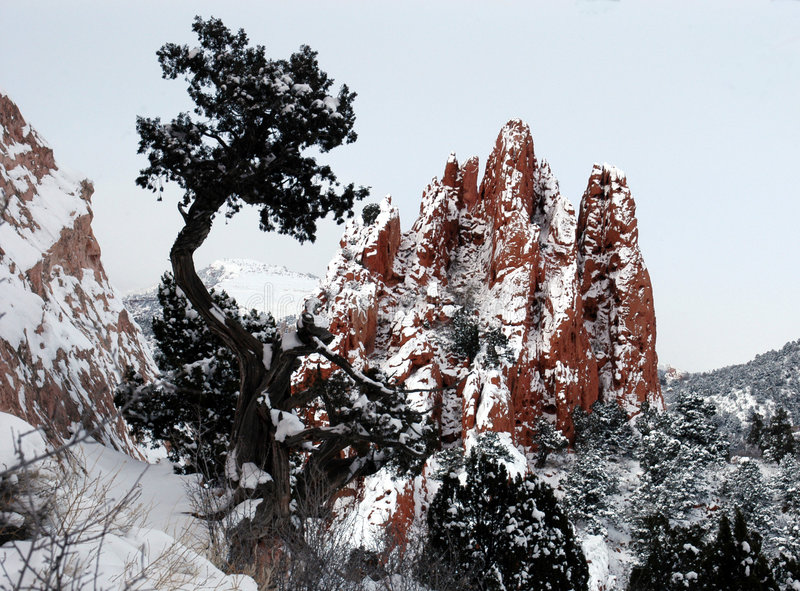 De rotsboom van de hemel royalty-vrije stock afbeeldingen