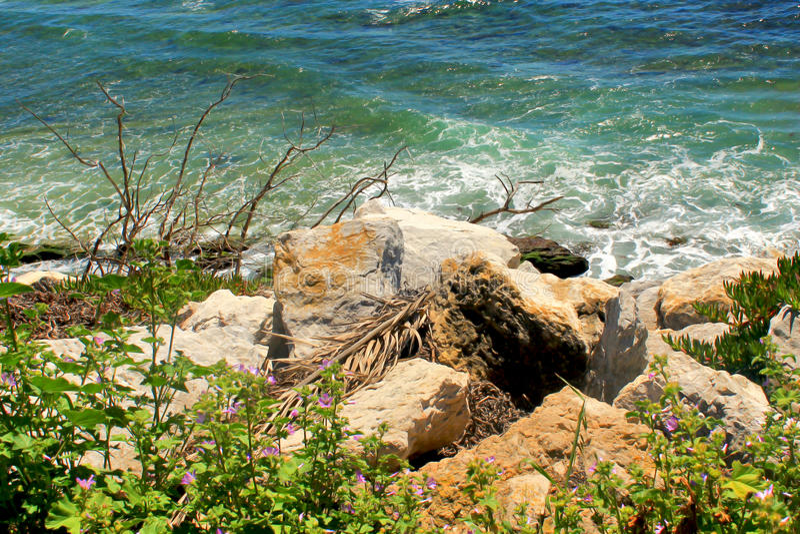 De rotsen en de bloemen van zeegezichtdetails royalty-vrije stock foto