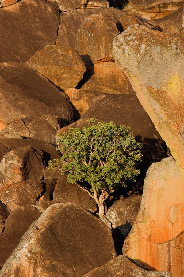 De rotsen en de boom van het graniet stock afbeeldingen