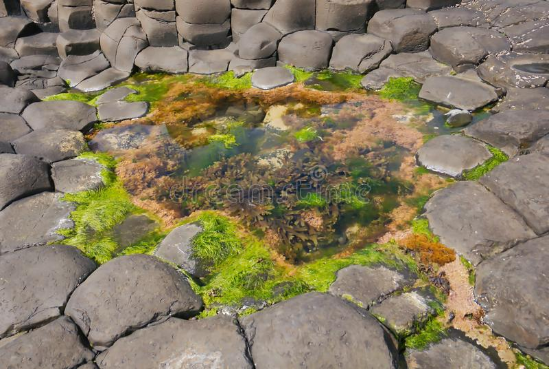 De Rotsen en het water van de reuzenverhoogde weg met zeewier royalty-vrije stock afbeeldingen