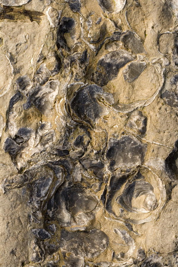 De rotsen met embeded binnen fossielen   stock fotografie
