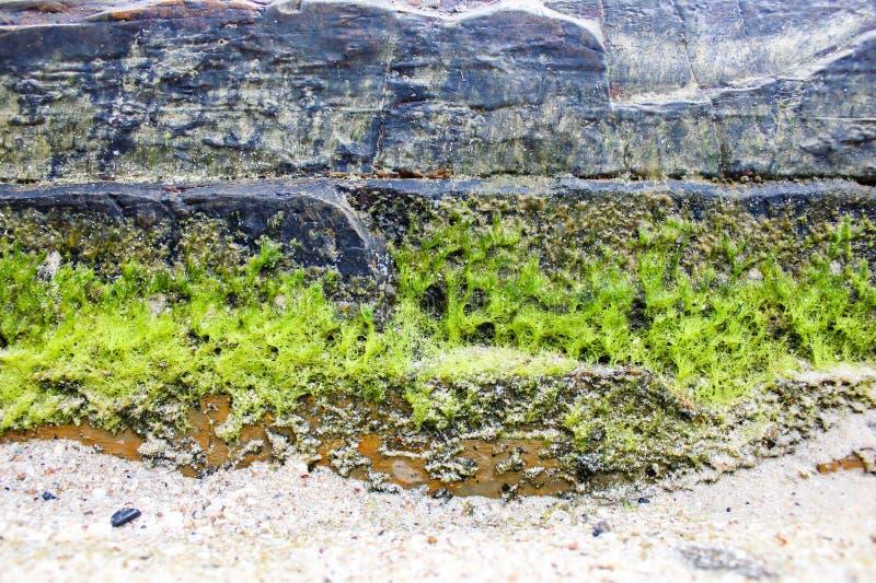 De rotsen op het strand royalty-vrije stock afbeelding