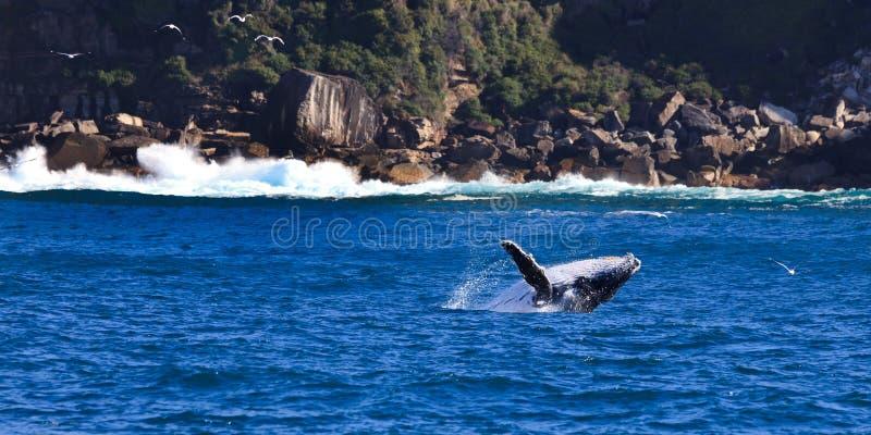 De Rotsen van de walvis royalty-vrije stock foto