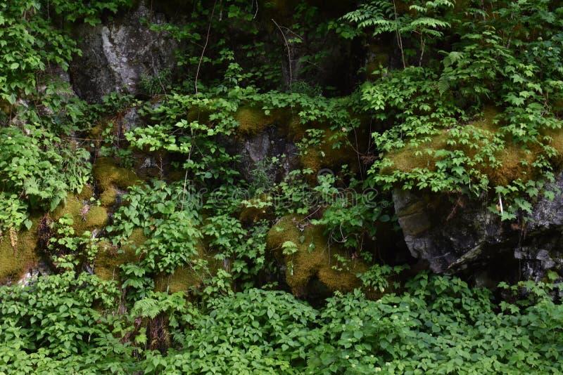 De rotsen van de mosdekking in het Rokerige Berg Nationale Park royalty-vrije stock fotografie