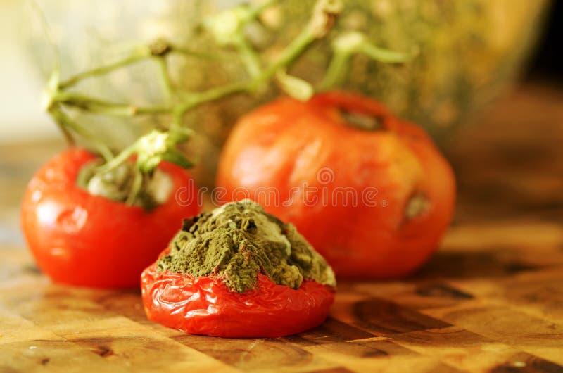 De rottende tomaten van het close-updetail op de wijnstok royalty-vrije stock afbeelding