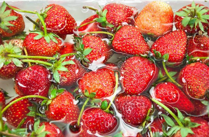 De rouge fraise fraîchement à l'intérieur d'eau froide, plan rapproché doux de fraises de ressort images libres de droits