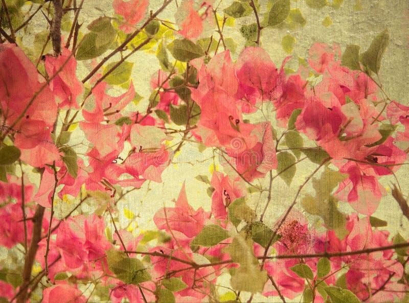 De roze achtergrond van de bougainvilleakunst vector illustratie