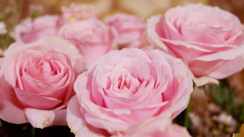 De roze achtergrond van het rozenboeket Sluit omhoog stock afbeeldingen