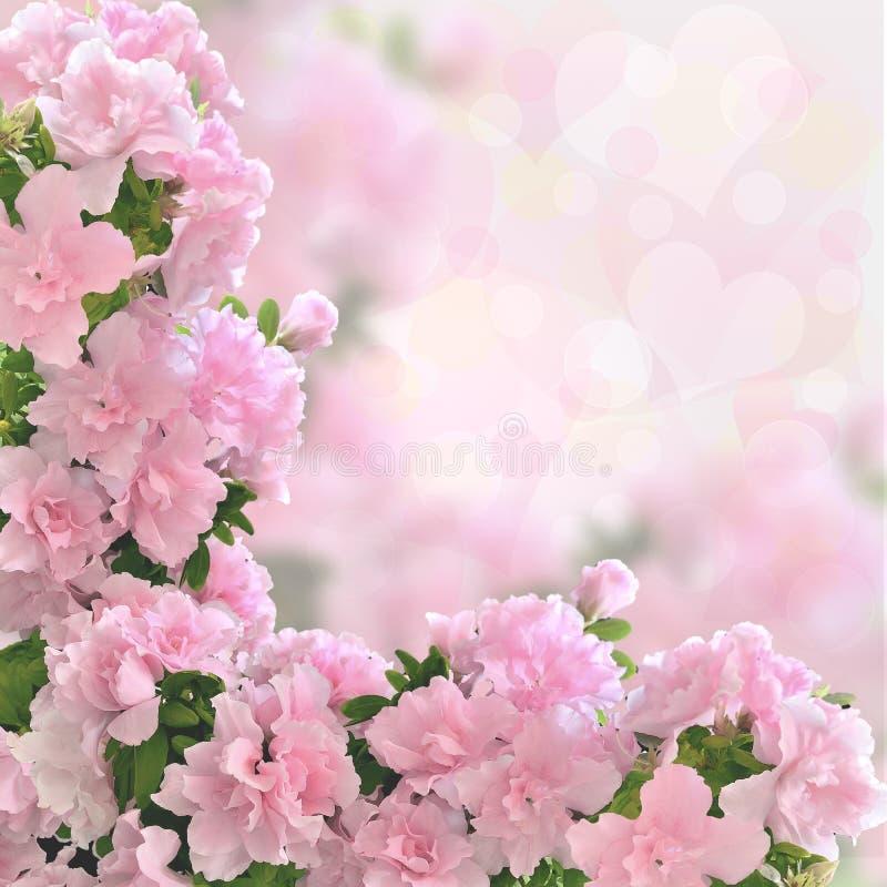 De roze azalea bloeit romantische achtergrond stock afbeelding