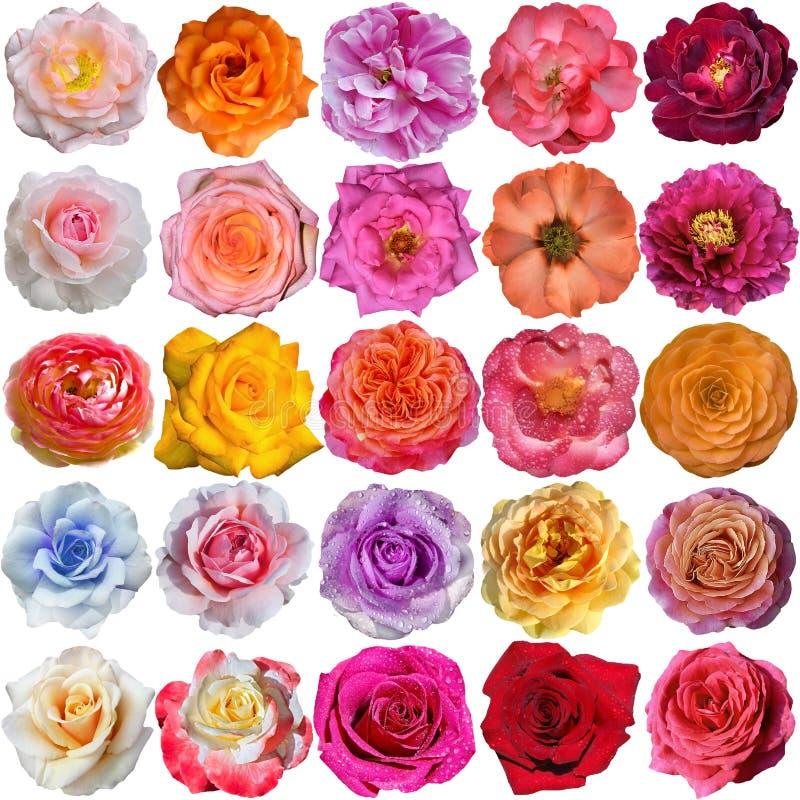 De roze bloei royalty-vrije stock fotografie