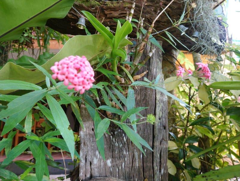 De roze bloem royalty-vrije stock foto's