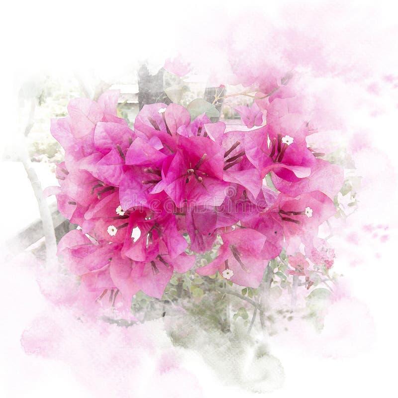 De roze bloem van bloesembougainvillea vector illustratie