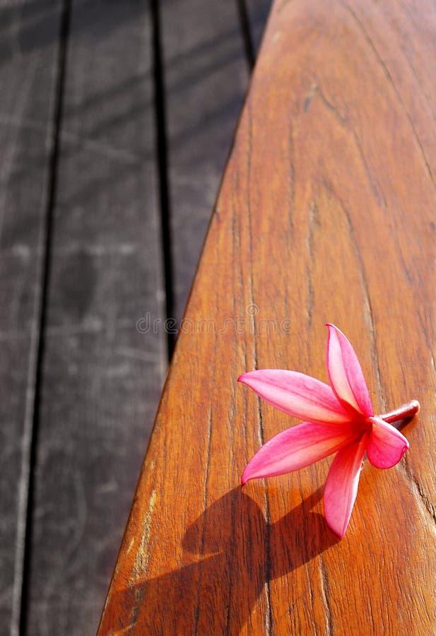 De roze bloem van het stilleven op houten lijst royalty-vrije stock fotografie