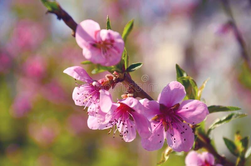 De roze bloemen sluiten omhoog royalty-vrije stock foto