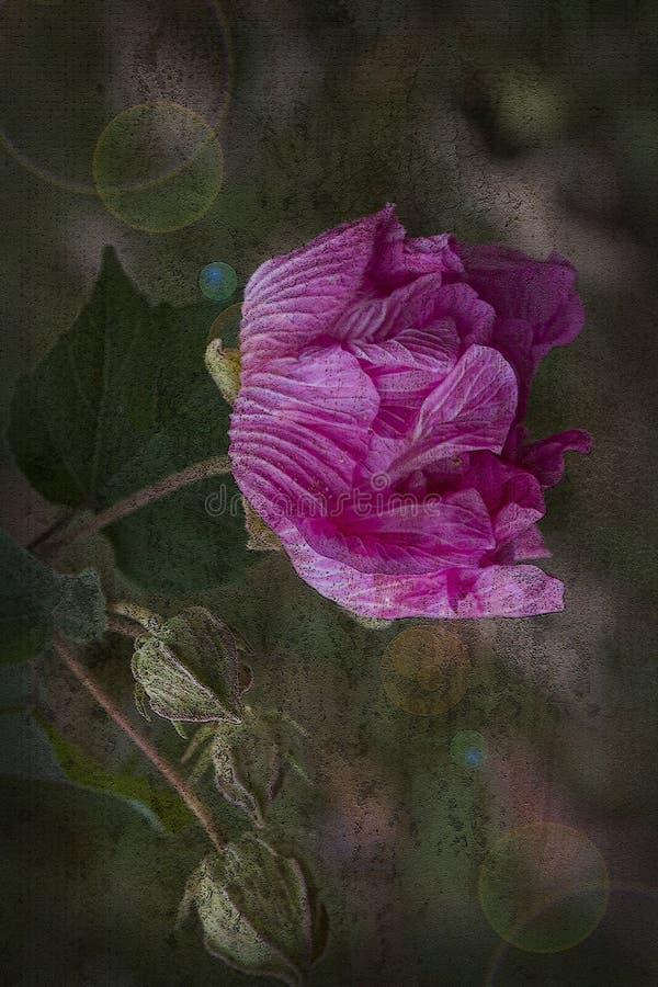 De roze Bloesem van Verbonden nam met Grunge-Texturen en Lensgloed toe royalty-vrije stock foto