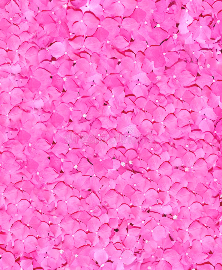 De roze bruids rozen van het huwelijk van hierboven royalty-vrije stock fotografie