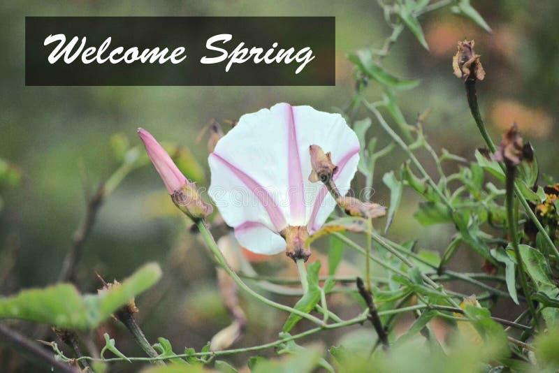 De roze en Witte Bloem Welkome Lente stock afbeeldingen