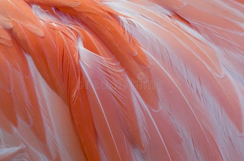 De roze Flamingo bevedert dicht omhoog royalty-vrije stock fotografie