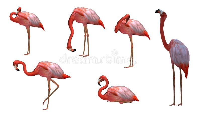 De roze Flamingo stelt pak stock illustratie