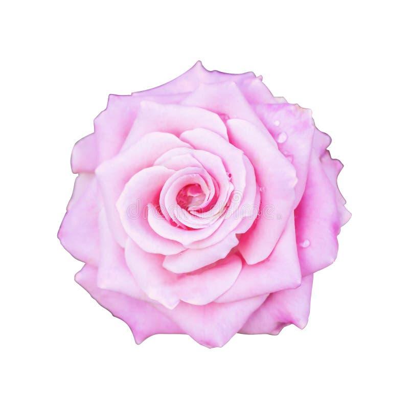De roze giften van de rozenvakantie en andere Dag romantische geïsoleerde witte achtergrond stock foto