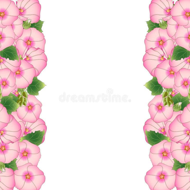De roze Grens van Alcea Rosea - stokrozen, Aoi in de malvefamilie Malvaceae Geïsoleerdj op witte achtergrond Vector illustratie royalty-vrije illustratie