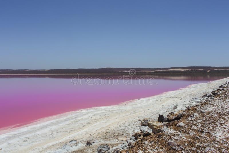 De roze Lagune van de meerhut bij Haven Gregory, Westelijk Australië, Australië stock fotografie