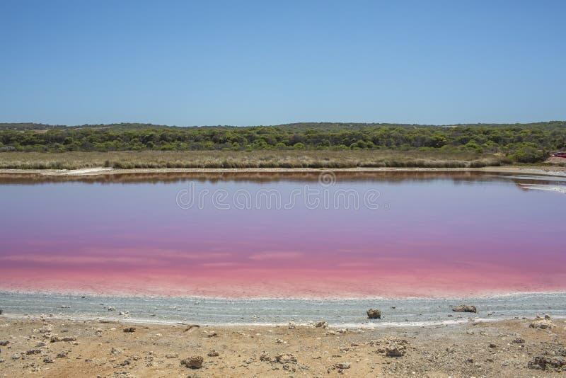 De roze Lagune van de meerhut bij Haven Gregory, Westelijk Australi?, Australi? stock fotografie