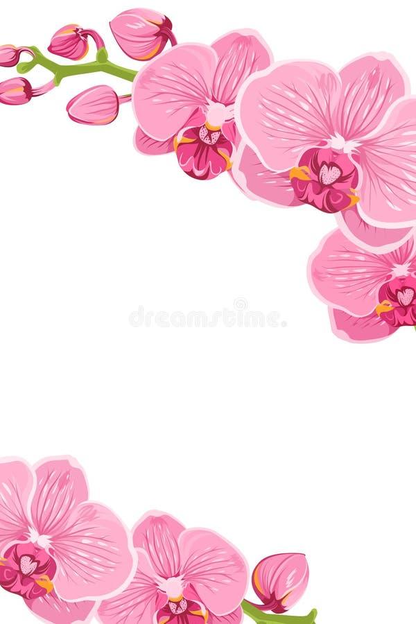 De roze orchidee bloeit het malplaatjekaart van het grenskader vector illustratie