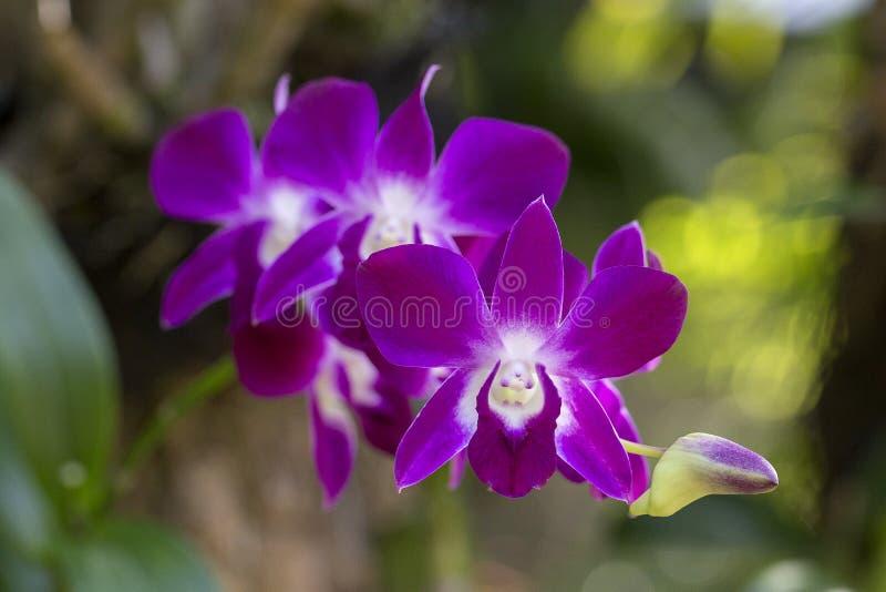 De roze orchideebloemen, sluiten omhoog royalty-vrije stock foto's