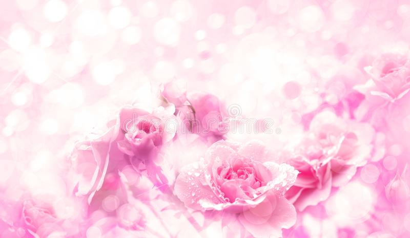 De roze rozen bloeit bokeh achtergrond stock foto's