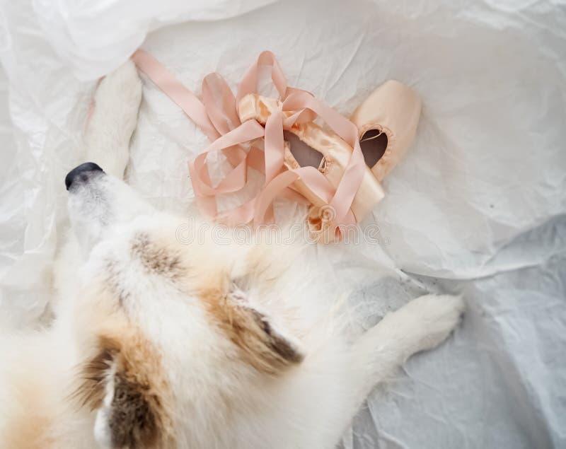 De roze schoeisel met satijnballet steekt naast de wazige hond op de achtergrond van het grijze oppervlak stock afbeelding
