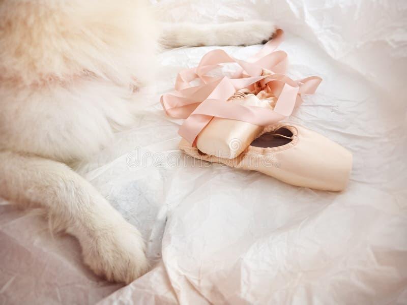 De roze schoeisel met satijnballet steekt naast de wazige hondenpoten, op de grijze ondergrond royalty-vrije stock foto's