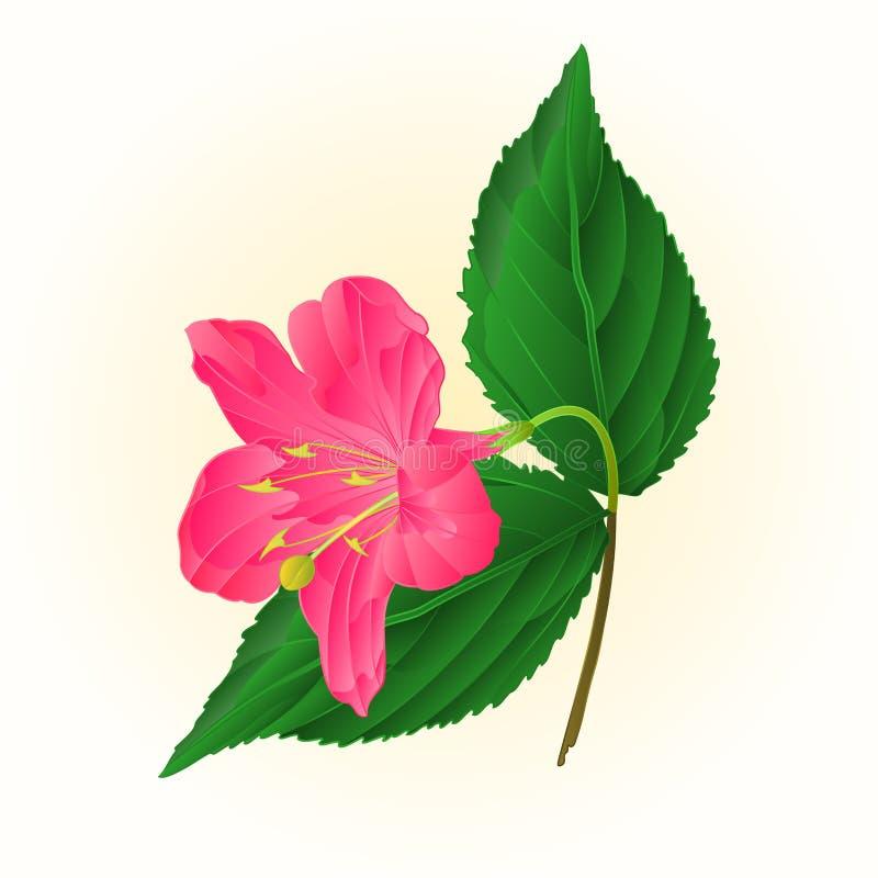 De roze uitstekende vector van Weigela van de bloem decoratieve struik royalty-vrije illustratie