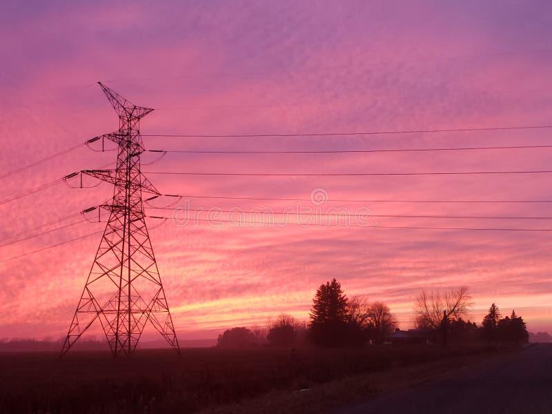 De roze verrukking van hemelzeelieden stock afbeelding
