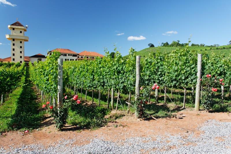 De Rozen en de Wijngaarden van de toren stock foto