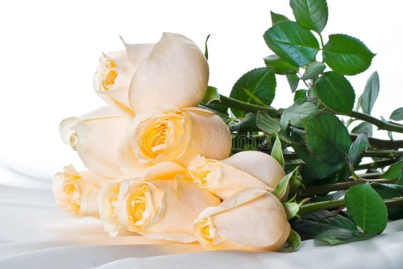 De rozen van Champagne stock afbeelding
