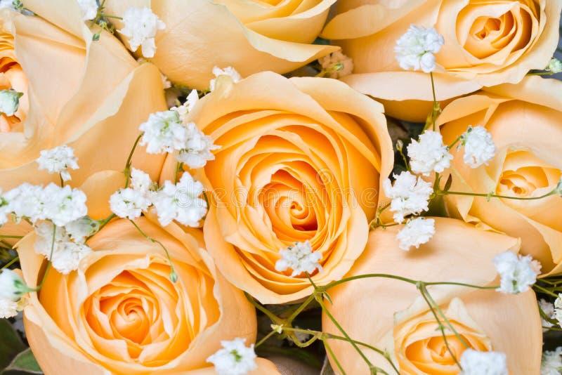 De rozen van Champagne met gypsophilapaniculata stock afbeeldingen