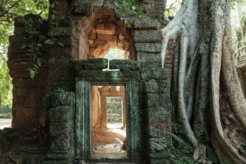 De ruïnes van de Tempel van Ta Prom, het Historische Park van Angkor, Siem oogsten, Kambodja royalty-vrije stock afbeelding