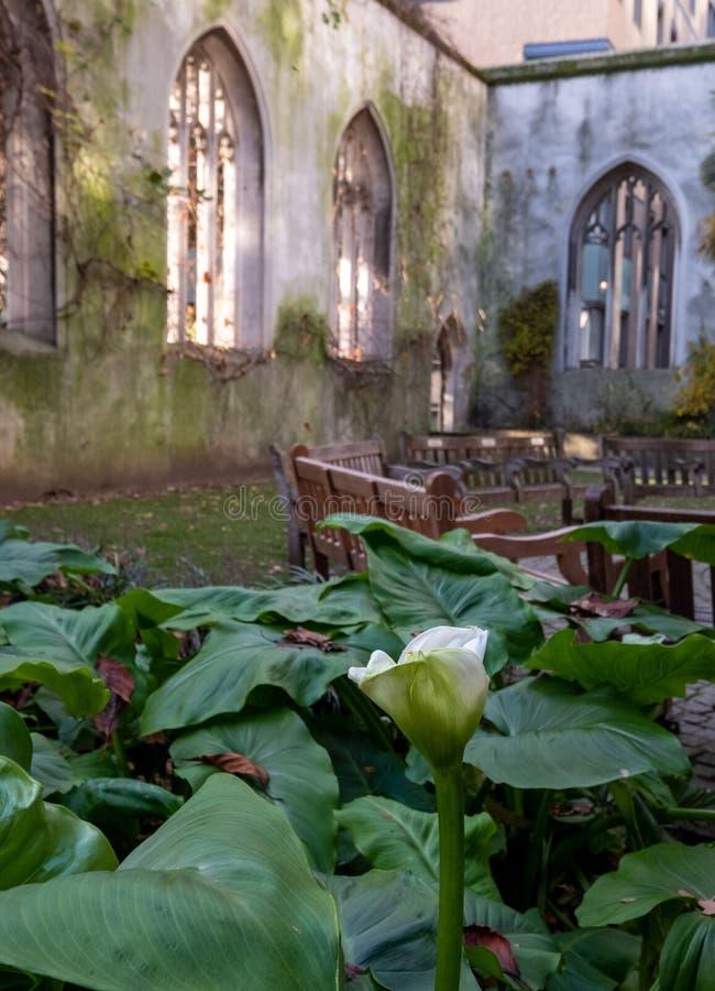 De ruïnes van St. Dunstan in de East Church in de City of London UK De historische kerk werd gebombardeerd en verwoest in WW2 royalty-vrije stock afbeeldingen