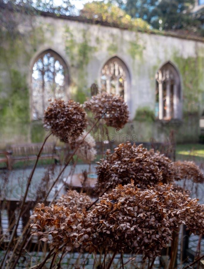 De ruïnes van St. Dunstan in de East Church in de City of London UK De historische kerk werd gebombardeerd en verwoest in WW2 stock foto